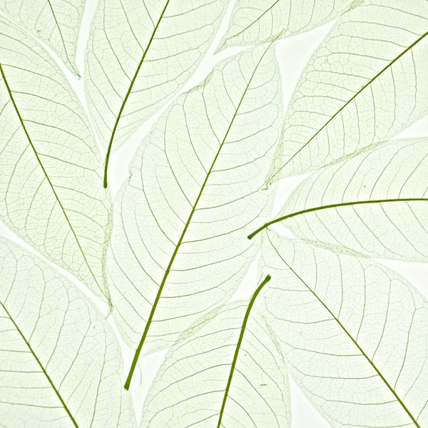 decodeco-nature-orchid-leaf-green