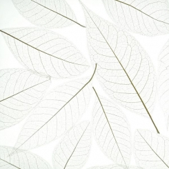 decodeco-nature-orchid-leaf