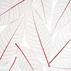 decodeco-nature-orchid-leaf-red